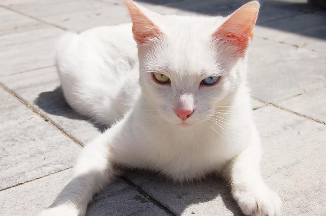 cat-201767_640