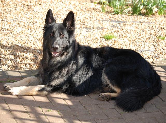 dog-398557_640
