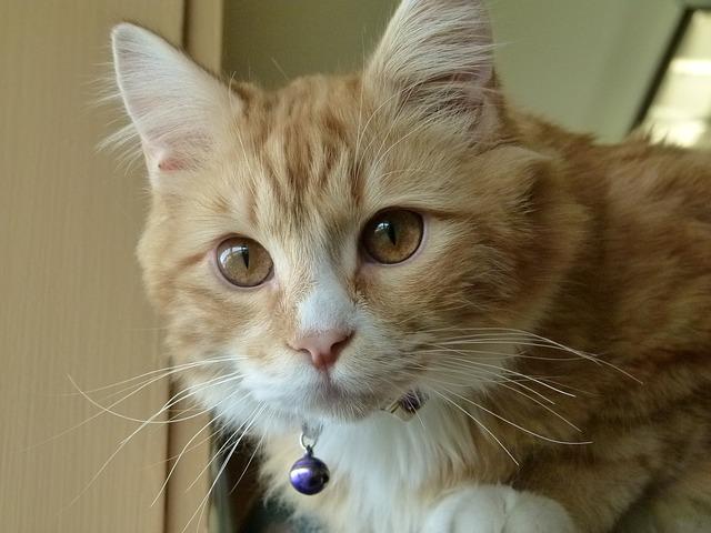 kitten-333278_640