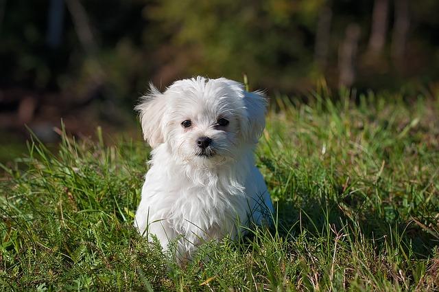 dog-1123016_640