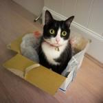 猫の便秘症