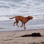 シニア犬に増えている慢性腎不全の予防法