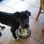 愛犬の健康に配慮したドッグフードの選び方について『グリーンプラス』