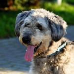 犬や猫の口臭の原因