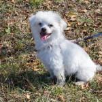 愛犬の便秘対策とその原因