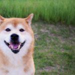 大好きなペットが健康に長生きできるように!気をつけなきゃならないことってなに?