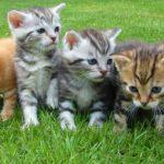 ペットの健康を維持する為に気をつけてる5つの事
